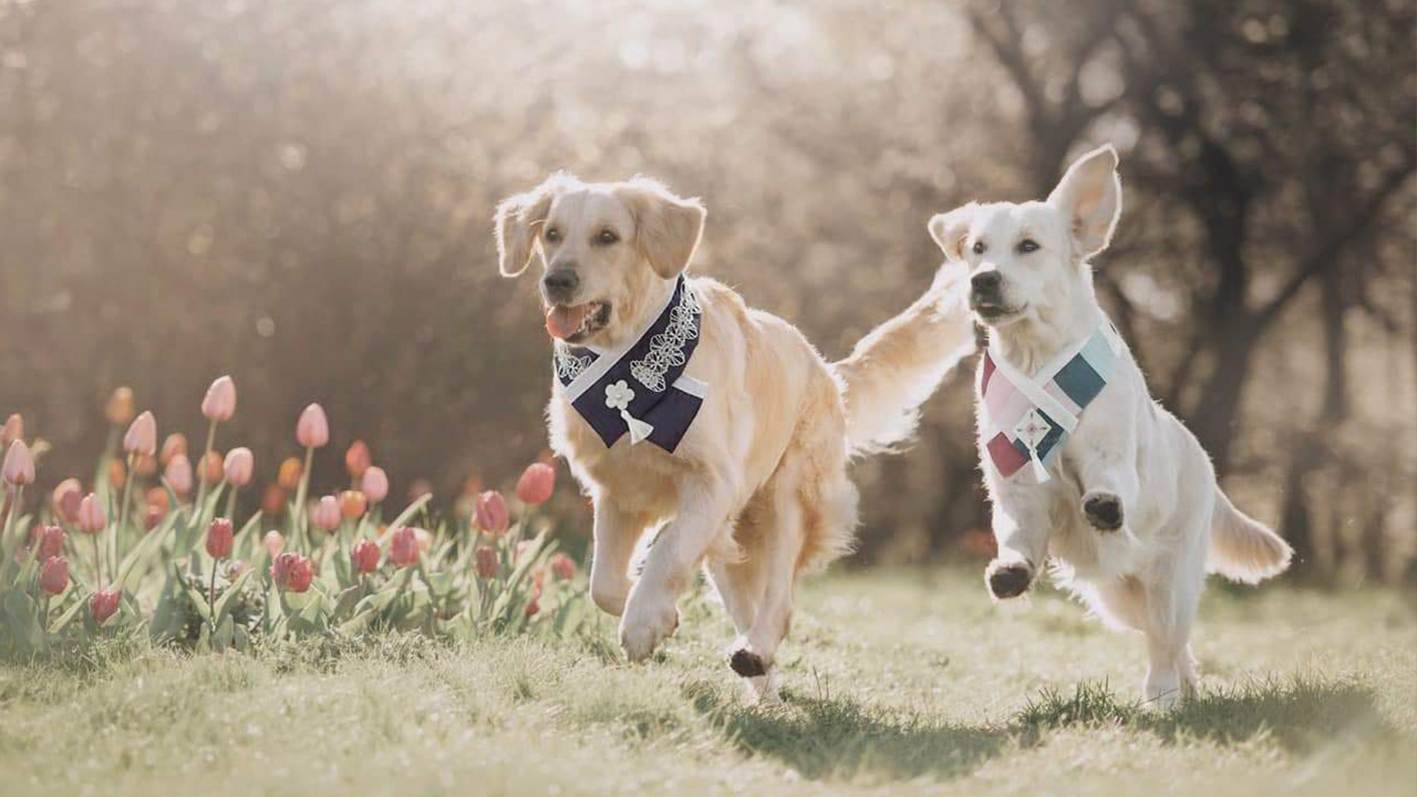 Artificial intelligence and big data revolutionizing pet care