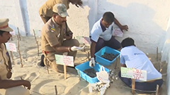Over 130 endangered turtle hatchlings released into sea in India