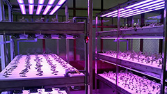 Farmers in S. Korea use supplementary lighting to grow plants