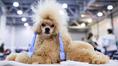Dance championship held for dog lovers and their pawed friends