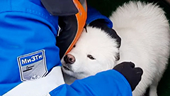 Russian sailors rescue dog stranded on floating Arctic ice