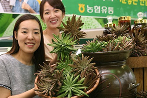 Grocery chain offers 'wasong' herb