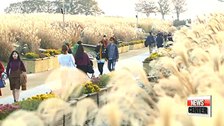Fields of Reeds at Haneul Park