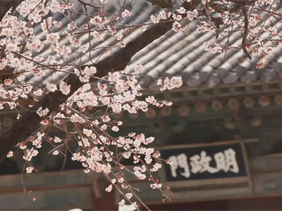 The Grand Heritage Ep9C2 Sadness Hidden Behind Cherry Blossoms