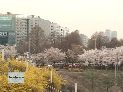 Seoulscape Ep11C2 Spring Flowers in Seoul