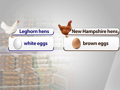 Business Daily _ White eggs vs. brown eggs? _ Ep464