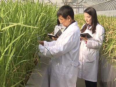 InfoScope Icheon Rice Upgraded with Science