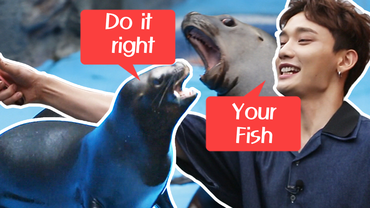 [Tour Avatar] MAP6 (맵식스), Sea Lion Feeding