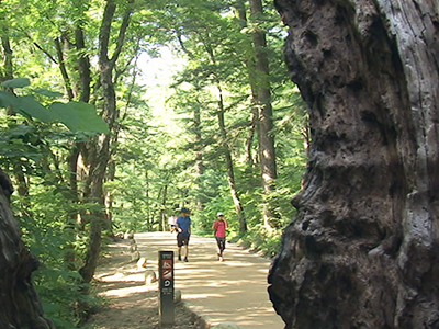Fir tree-lined path in Odaesan Mountain