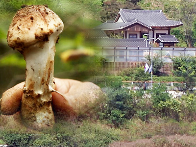 4 Angles Ep.190 [ A Day in Hanok/Capturing the Magic of Autumn/10th Anniversary of the Jeju Olle Trail/Matsutake ]