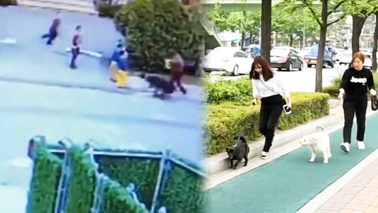 [Upfront] REASONS FOR RECENT SURGE IN DOG ATTACKS