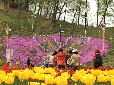 Spring Flowers, Yongin Agricultural Theme Park