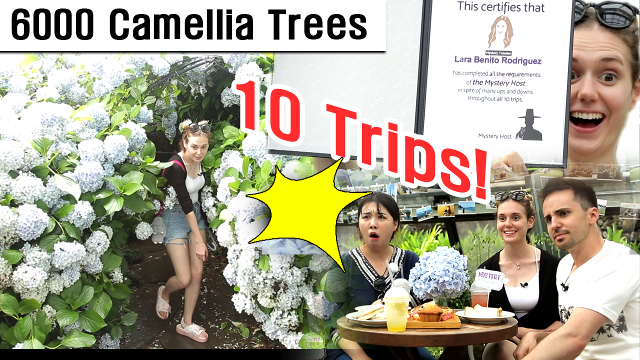 [MYSTERY TRAVELERS] Enjoy 6000 Camellia Trees of 500 Different Types! [Jeju C...