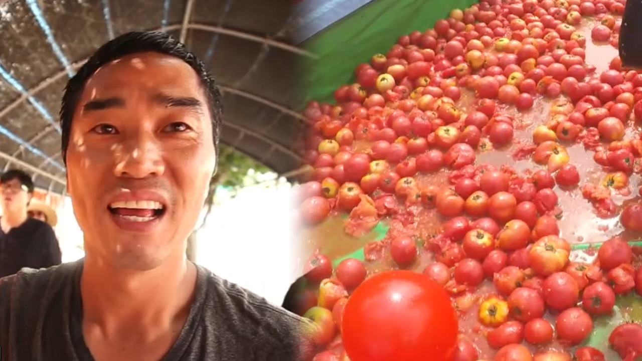 [NOW] Splat! Hwacheon Tomato Festival