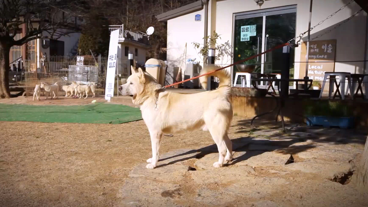 [A Road to Peace] 27-3 Pungsan Dogs Bring Two Koreas Together
