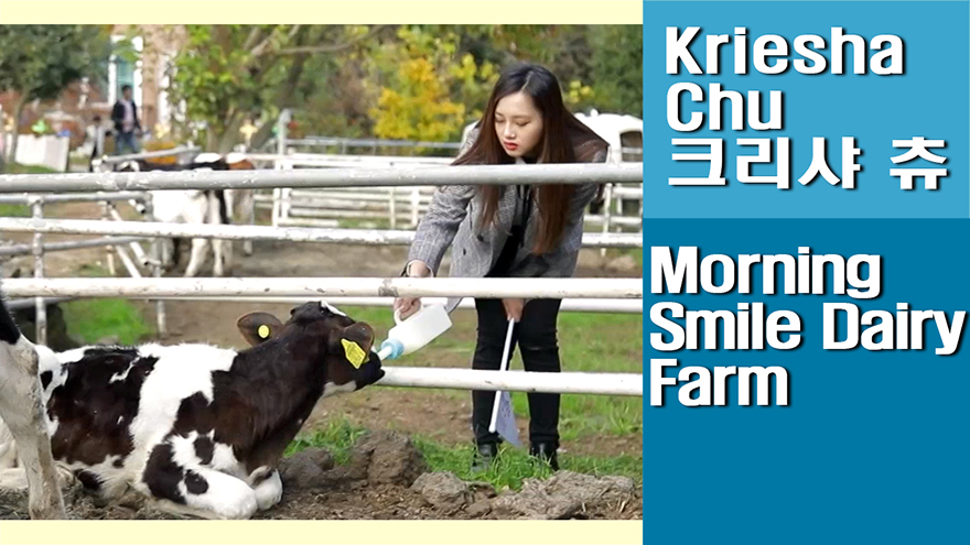 [Travel Agency] Jeju Morning Smile Dairy Farm, looking around the ranch and f...