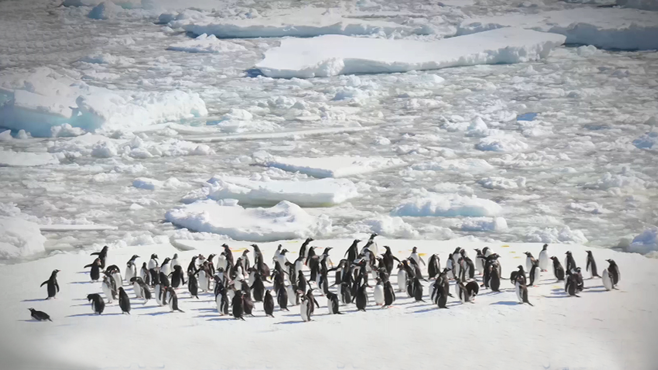 Global Warming And The Penguins | Behavioral Ecologist, Dr. Lee Won-young