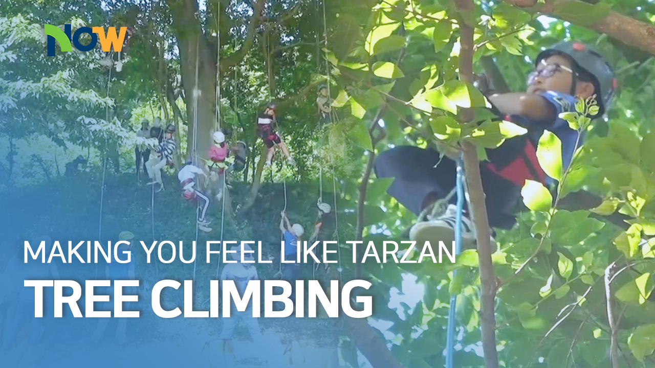 A Trending Recreational Activity, Tree Climbing