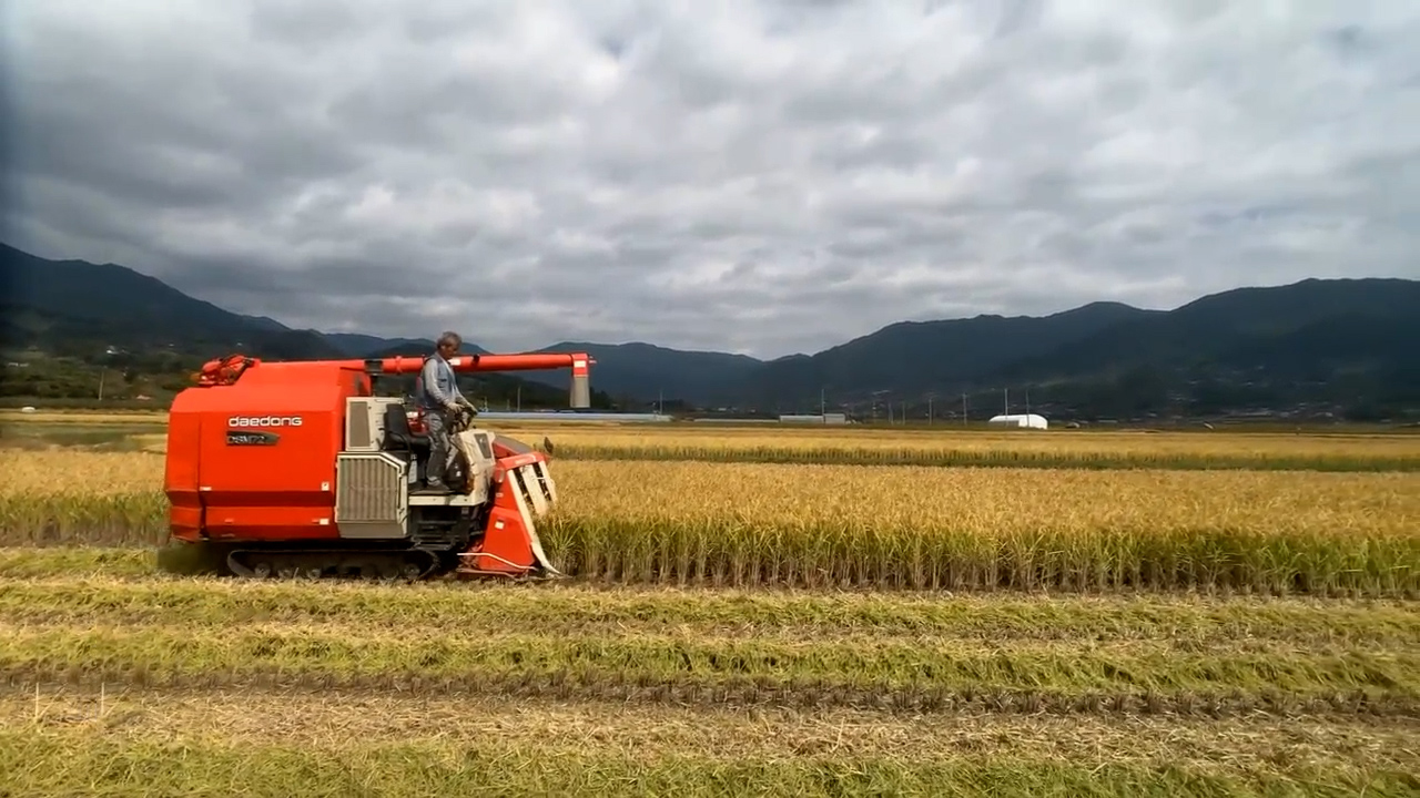 Harvesting season in South Korea