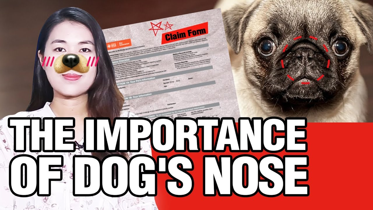 [UNNIE NEWS] The Importance of Dog's Nose