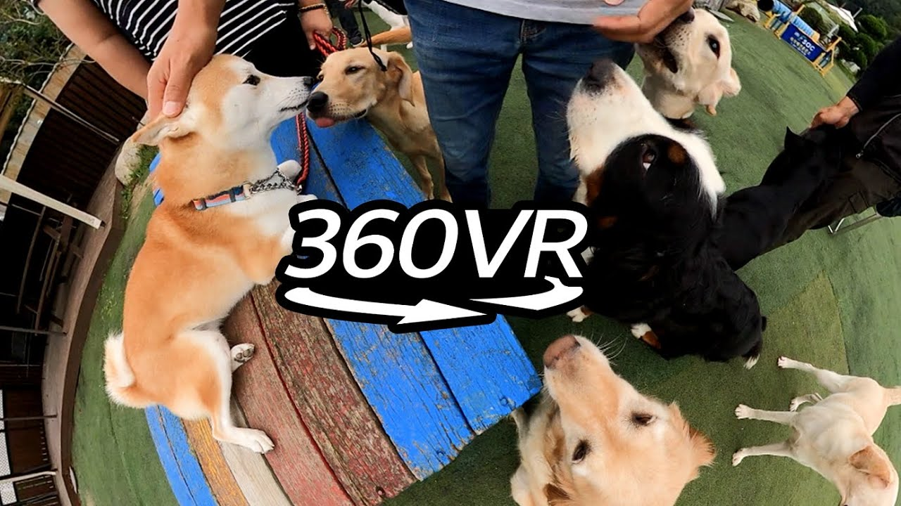 Happy Dogs 🐶 Happy Humans 🌝 반려견과의 행복한 삶 [360 Camera]