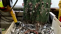 WTO agrees to redouble efforts to reach deal on banning subsidies for illegal fishing