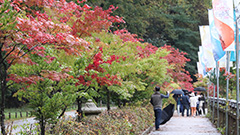 Fall foliage season starts in S. Korea with slight delay due to higher temperatures