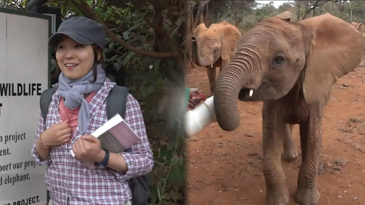 [Globetrotters] Going to Elephant Orphanage in Kenya!