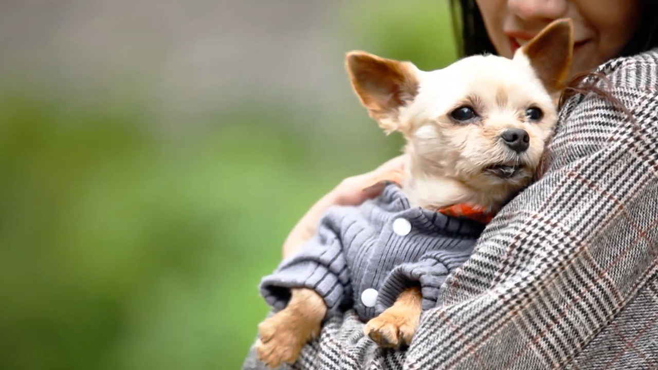 Ep.12 A Happy Life with Pets in Gangnam (Season 3)